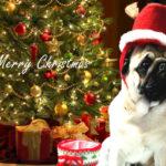 クリスマスプレゼントにおすすめはコレ!