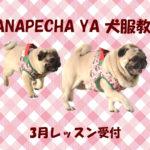 HANAPECHA YAの犬服教室 3月レッスン受付開始のご案内