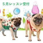 HANAPECHA YAの犬服教室 5月レッスン受付開始のご案内