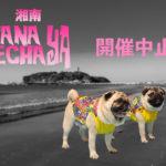 湘南HANAPECHA YA開催中止のお知らせ