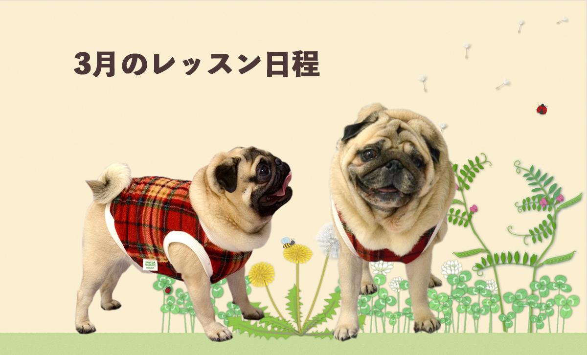 HANAPECHA YAの犬服教室 3月レッスンスケジュールのご案内