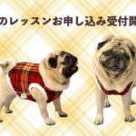 HANAPECHA YAの犬服教室 2021年3月レッスン受付開始のご案内